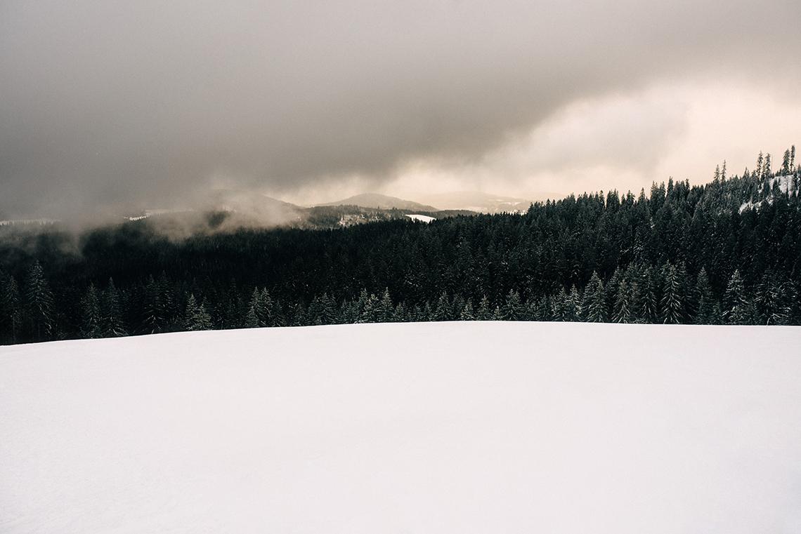 Black Forest Isabell Steinert Fotografie